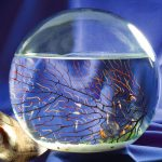 Aquatic Self-Enclosed Ecosystem