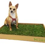 Real Grass Patch Dog Potty